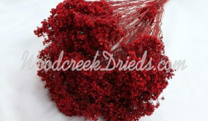 Broom Bloom - Red (out of stock)