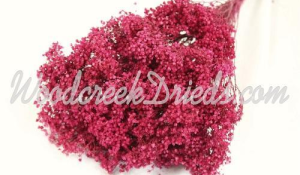 Broom Bloom - Raspberry (out of stock)
